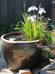 Iris and a lilly in a water bowl