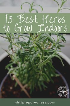 Here are 13 of the best herbs to grow indoors with ease. Trying your hand at growing them indoors is well worth the effort! Here are 13 of the best herbs to grow indoors with ease. Trying your hand at growing them indoors is well worth the effort! Herb Garden Design, Diy Herb Garden, Garden Ideas, Garden Bed, Indoor Gardening Supplies, Container Gardening, Gardening For Beginners, Gardening Tips, Best Herbs To Grow