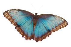 "Saatchi Art Artist Mahsa Watercolor; Photography, ""Butterfly"" #art"