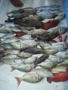 Farasan trip Saudi Arabia Red sea  #3ble_hook Jeddah, Red Sea, Saudi Arabia, Fishing, Peaches, Pisces, Gone Fishing
