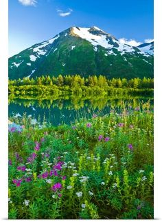 Portage Valley in the summer with wildflowers, Chugach National Forest, Alaska