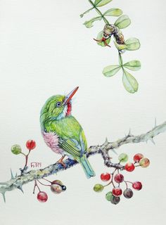 Cuban tody. Original watercolour. Bird illustration.