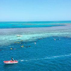 Just hangin at the reef. #greatbarrierreef #whitsundays #scubasteve #typicalsunday #australia by megangoode22 http://ift.tt/1UokkV2