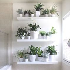 """123 Likes, 31 Comments - Kate (@housemixblog) on Instagram: """"This weekend Marcello and I put this plant wall up in our bathroom! This morning he asked me if he…"""""""