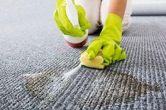 katzenurin entfernen sofa tiere pinterest katzenurin entfernen geruch und sofa. Black Bedroom Furniture Sets. Home Design Ideas