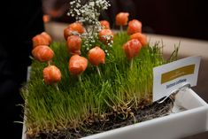 At this year's Luminescence gala in Chicago, passed canapes included cured salmon lollipops, displayed on beds of wheatgrass.