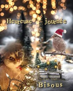 Belle Photo, Christmas Time, Stickers, Movie Posters, Good Morning Images, Happy Day, Beautiful Pictures Of Flowers, Beautiful Day, Inspirational Quotes
