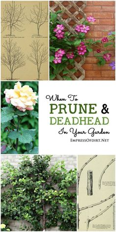 Pruning is probably one of the most confusing topics for new gardeners because there is no single method or timing that suits all situations. But, there are some basic underlying principles that, once you know them, can make it much easier to know whether to snip and clip or leave things alone. This post walks you through a pruning and deadheading calendar which you can adapt for the plants in your garden.
