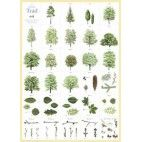 Svenska träd affisch - Barnbokhandeln