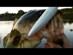 Huge Topwater Bass on the new Bass BRat - First Prototype Pond Test Lands 2 Big Bass