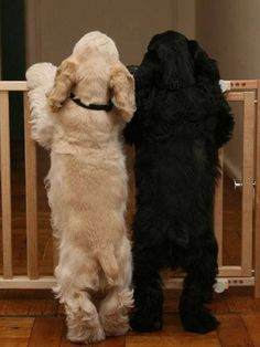 <3,they make my pulse rate go up..and you know those tails are a blur!