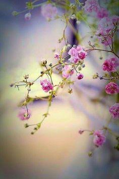 Beautiful Flowers Wallpapers, Beautiful Nature Wallpaper, Beautiful Landscapes, Beautiful Images, Flower Pictures, Nature Pictures, Flower Backgrounds, Wallpaper Backgrounds, Geometric Wallpaper