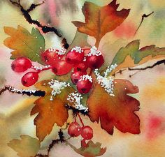"art by anne mortimer | Snowy hawthorn"" by Ann Mortimer 
