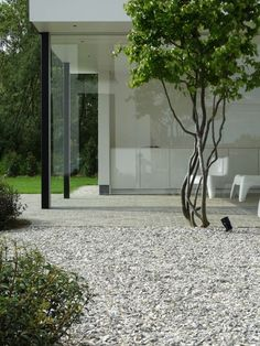 Need some low maintenance garden design ideas? Learn the fundamentals and tips to creating the perfect low mainteance outdoor space in our feature article. Contemporary Garden Design, Home Garden Design, Landscape Design, Modern Design, Home And Garden, Design Design, Design Ideas, Specimen Trees, Patio Layout