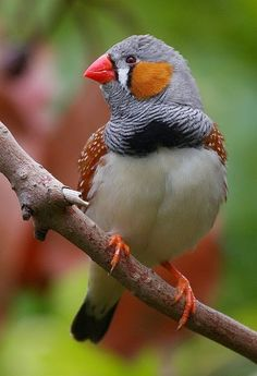 Bird Photography - Google+