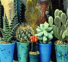 A combination of succulents and cactus.happy houseplants but work outdoors under the right conditions. Cacti And Succulents, Planting Succulents, Planting Flowers, Succulent Planters, Hanging Planters, Air Plants, Garden Plants, Indoor Plants, Indoor Cactus