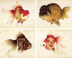 fancy goldfish art