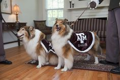 Last year of college vs. first year of college! Goodbye Miss Reveille VIII and hello Miss Reveille IX.