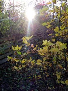 autor: jlez, Poland (tytuł: Natura 4062 - jesień, słońce, drzewo, liście)