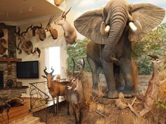 Trophy Rooms, Taxidermy, Game Room, Hunting, Elephant, Cabin, Gallery, Animals, Design