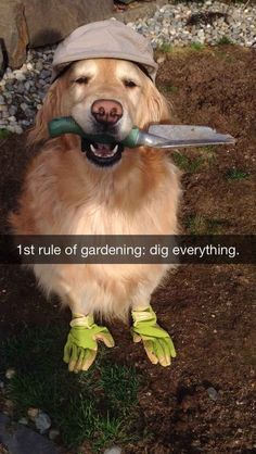 Primera regla de jardinería: excavar primero.