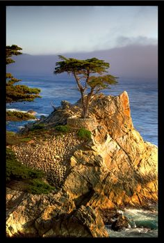 """Lone Cypress, Monterey Peninsula, California: """"Butterfly Town USA"""". A Must Visit Place!!"""