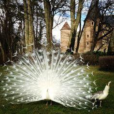 Le couple du jour au Château d'Ainay-le-Vieil via @herveborne