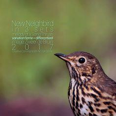 New Song: New Neighbird - Zanglijster interpretatie in 3 sets on http://on.dailym.net/2ul5VXQ #NewNeighbird, #PolyphonicTranscriptions, #RXDialogDeNoise, #SonicVisualiser, #TheOpeningXL, #YouCompose, #Zanglijster, #ZweerDeBruin