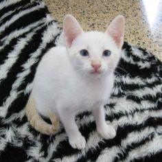 CORA - Gato adoptado - Asoka el Grande