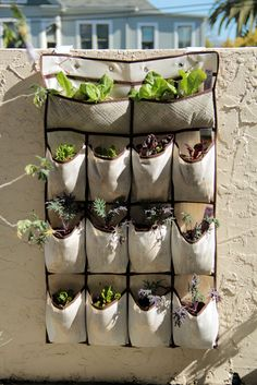 VEGETABLES Grow Up in a Small Garden and Confound the Cats Shoe organizer as a hanging planter For herbs small flowers cherry tomato plants even spinachShoe organizer as. Hanging Herbs, Diy Hanging, Hanging Planters, Planter Boxes, Hanging Gardens, Wall Planters, Planter Ideas, Upside Down Tomato Planter, Cherry Tomato Plant