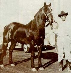 hancock bred quarter horses | Joe Hancock was bred by John Jackson Hancock who homesteaded ...