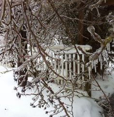 Frozen rose hips and gate