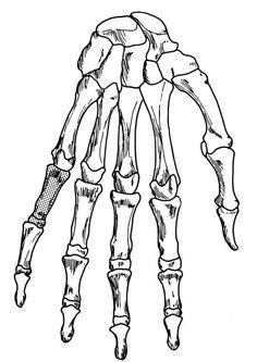 human skeleton coloring page | Halloween | Pinterest | Human ...
