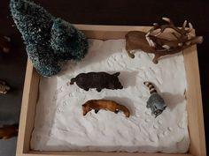 Empreintes animaux de la forêt