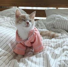 Cute Kittens, Cute Baby Cats, Cute Little Animals, Cats And Kittens, Meme Chat, Bb Chat, Animals And Pets, Funny Animals, Photo Chat