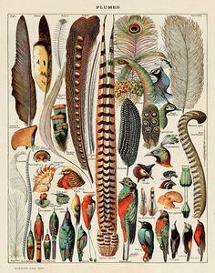 Etsy の Feathers Print by michaelellisstudios