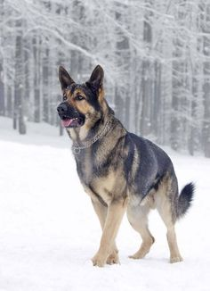 Such a beautiful dog deserves a German Shepherd name that reflects such beauty. Like these... http://www.dog-names-and-more.com/German-Shepherd-Names.html