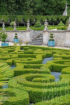 BUXUS SEMPERVIRENS TOPIARY IN PARTERRE GARDEN AT CHATEAU DE BRECY