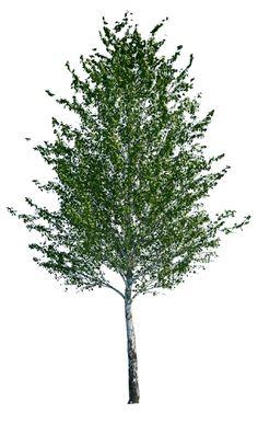 cutout tree