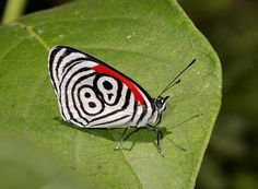The World's Top 10 Most Amazing Butterflies