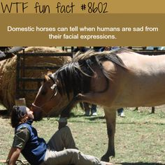 Horses can tell if humans are sad - WTF fun facts