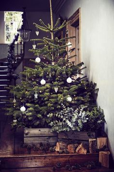 Keep your real and live Christmas tree fresher for longer by chopping or sawing a few centimetres off the bottom and soaking it in a bucket of water outside, either overnight or for as long as possible, before bringing it inside. (Photo: Wyevale Garden Centres). Get more advice at http://housebeautiful.co.uk