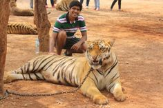 With A Tiger - Daring #GrabYourDream #Adventure #Travel #Contest