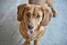 FDA warning! See more about Cave creek  dog training at k9katelynn.com! Care ...