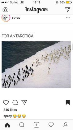 "For Antarctica!one little guy (middle-right):""Nope, nope, nope! You Funny, Funny People, Funny Cute, Funny Stuff, Animal Memes, Funny Animals, Tumblr Funny, Funny Memes, Laughing So Hard"
