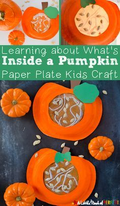 Learning about what's Inside a Pumpkin Paper Plate Kids Craft: Kids can craft and learn during this easy activity (fall, Halloween, preschool, kindergarten)