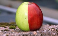 Ken Morrish, 72, of Colaton Raleigh, Devon, did a double take when he grew a Golden Delicious apple split down the middle - one half was gre...