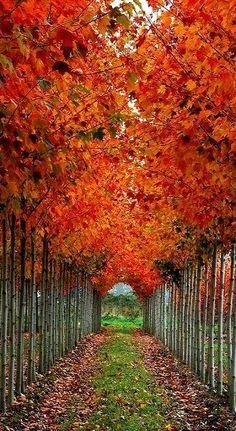 Tree Tunnel, Washington, U.S