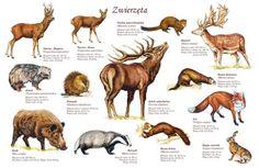 Visual Perceptual Activities, Natur Tattoos, Hunting Art, Animal Species, Abandoned Houses, Bushcraft, Prehistoric, Infographic, Homeschool