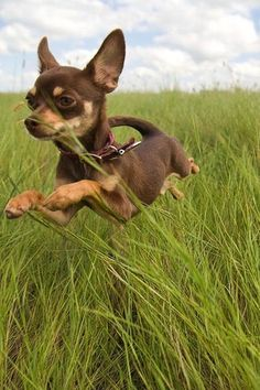 "Hover Dog flies through the air with the greatest of ease! _ ""I Am Tiny, but I Am Mighty!! Woof!"""